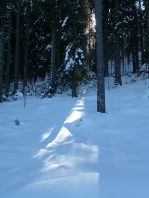 Foto Winterwald