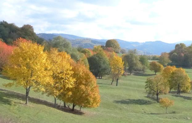 Wiesenhang mit Bäumen im Herbst