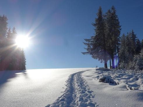 Bild einer Winterlandschaft mit gepurtem Pfad durch tiefen Schnee