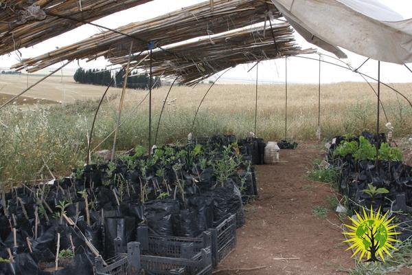 Pflanzensetzlinge unter Dach. Im Hintergrund - weite Felder und Wiesen