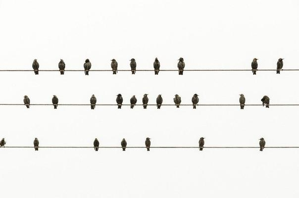 birds like notes on a wire