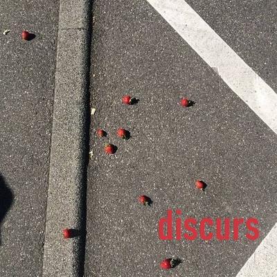bild mit auf dem boden liegenden erdbeeren. unten rechts in der ecke steht discurs.