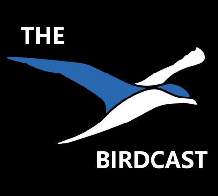 Artwork von BirdCast