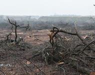 Gerodeter Wald an der Tagebaukante