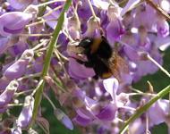 Blumen und Bienchen