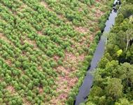 blick auf Regenwald / Forst