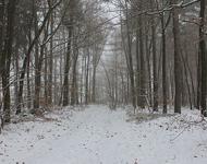 Wald_im_Schnee