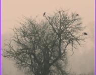 Herbststimmung_in_der_Aubinger_Lohe_(8179098924).jpg