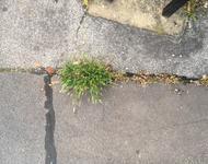 """Graswurzeln: Dérive geht u.a. dem Thema """"Wildpflanzen in der Stadt"""" nach"""