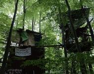Besetzung des Dannenröder Walds im Oktober 2020